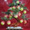 供应玉器礼品 风水摆件 十八苹果 盆景(平平安安)